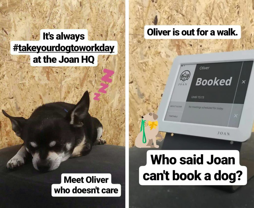 dog is booked with Joan