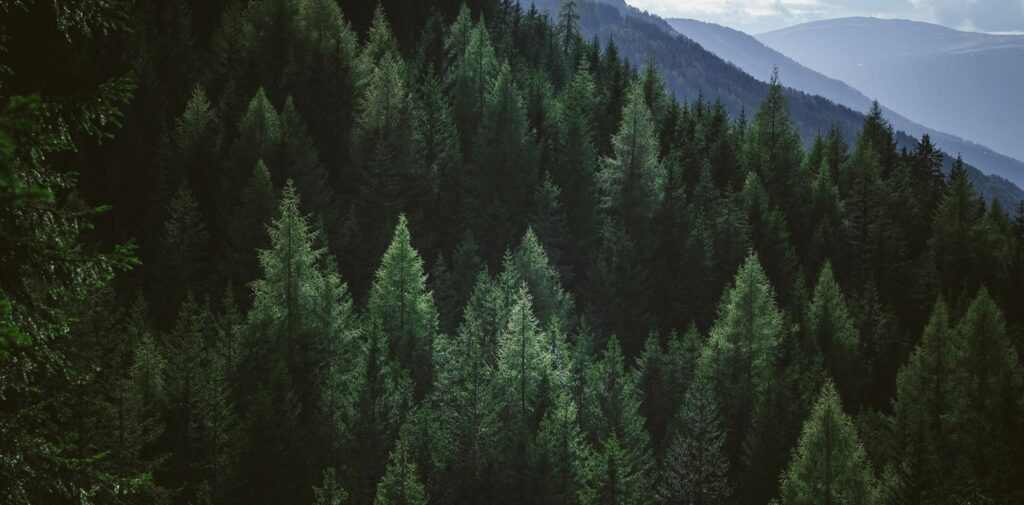 sustainable_forest
